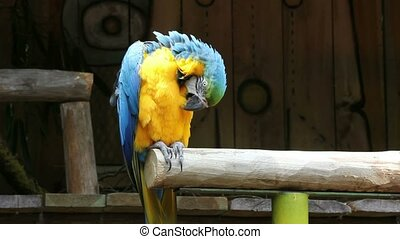 Beautiful parrot 02