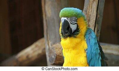 Beautiful parrot 03