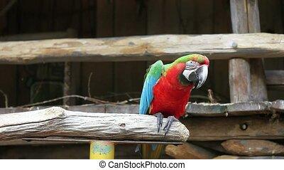 Beautiful parrot 05