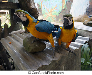 Beautiful parrots sitting on a branch
