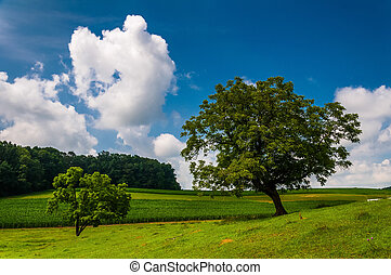 Beautiful partly-cloudy summer sky over trees and farm fields in Southern York County, PA.
