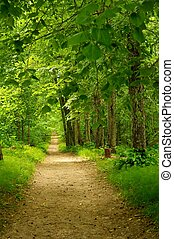 Beautiful path in forest