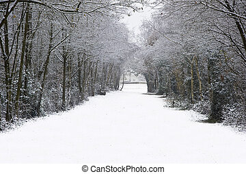 Beautiful path through forest with snow on ground and Autumn...