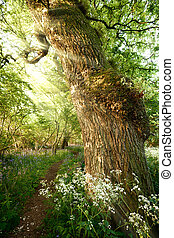 Beautiful path through spring woodland - Beautiful path...