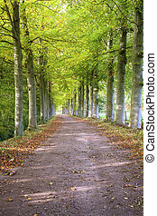 Beautiful path with trees
