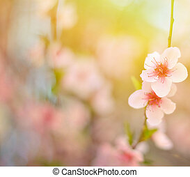 Beautiful peach flower against blured background