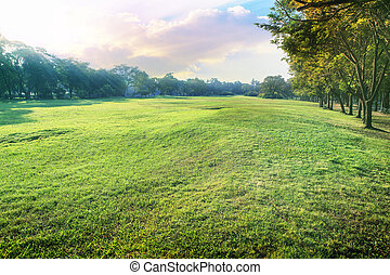beautiful perspective landscape of green environment park and sm