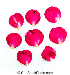 Beautiful petals of red roses