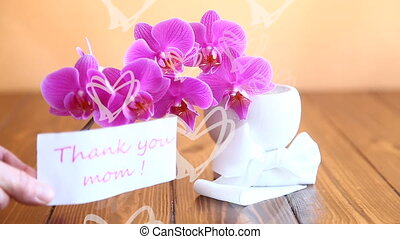 beautiful Phalaenopsis orchid flowers