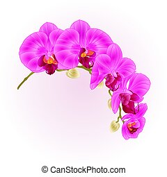 Beautiful  Phalaenopsis Orchid purple  stem with flowers and  buds vector.eps