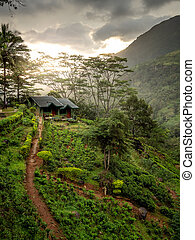 Beautiful photo of sunset light shining on the small house on the mountain slope at tropical jungle forest