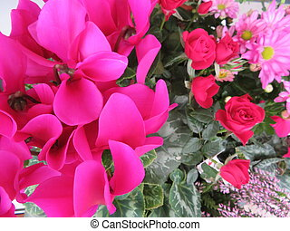 Beautiful picture of flowers of great beauty and good smell
