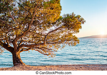 Beautiful pine trees and the shore of the blue sea in the evening. Croatia.
