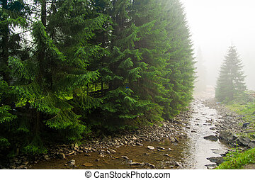 Beautiful pine trees on mountains - Beautiful green pine...