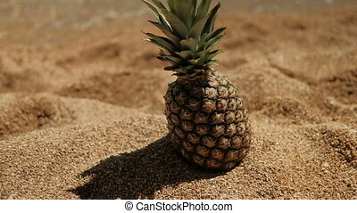 Beautiful pineapple on sandy beach on ocean shore in sunny...