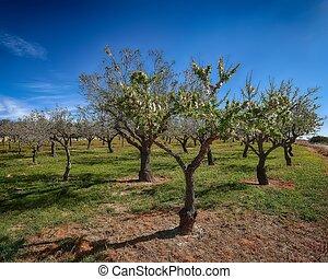 Beautiful pink almond flowers on almond tree branch in spring Italian garden, Sicilia