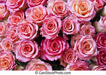 Beautiful pink flower background