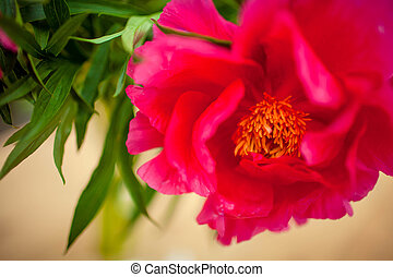 beautiful pink flower on a green background
