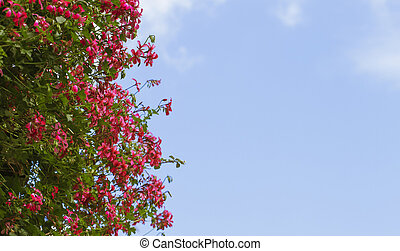 Beautiful pink flowers against blue sky