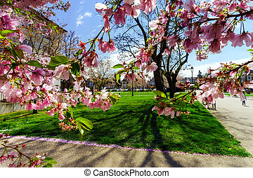 Beautiful pink flowers and green grass in the park