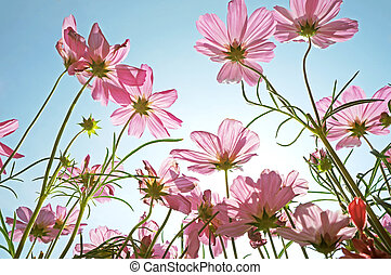 Beautiful pink flowers field against sky