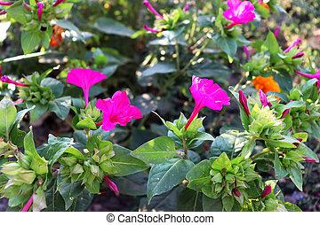 Beautiful pink flowers in garden