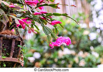Beautiful pink flowers in garden.