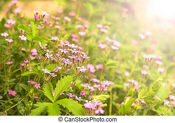 Beautiful pink flowers in the garden with bokeh background