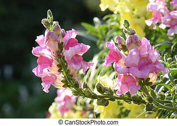 Beautiful pink flowers in the morning