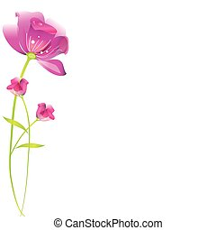 beautiful pink flowers ,isolated  on a white