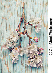 Beautiful pink flowers on a light blue wooden background