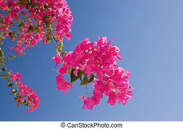 Beautiful pink flowers over blue sky