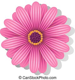 Beautiful pink Gerber Daisy over white. EPS 8, AI, JPEG