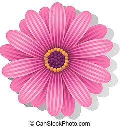 Beautiful pink Gerber Daisy over white. EPS 8, AI, JPEG