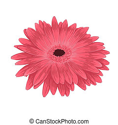 Beautiful pink gerberaisolated on white background .
