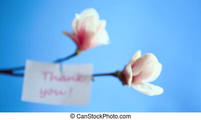 Beautiful pink magnolia flower on blue background