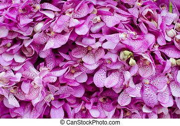 Beautiful pink orchid background