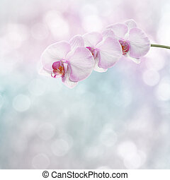 Beautiful pink orchid branch on an abstract background of a...