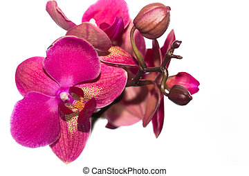 beautiful pink Orchid flower on a light background. isolated