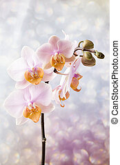 Beautiful pink orchid on a gray background.