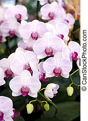 Beautiful pink orchids