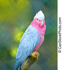 Beautiful pink parrot photo