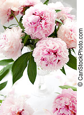 beautiful pink peony - Vase of peony blooms
