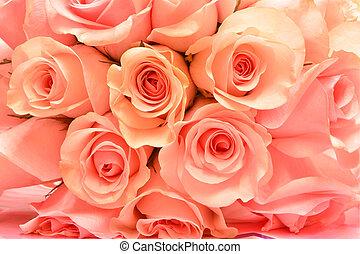 Beautiful pink rose background