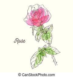 Beautiful pink rose illustration on white background