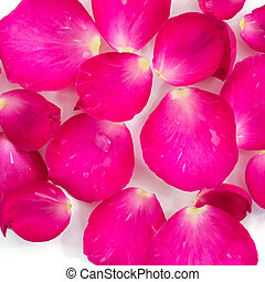 Beautiful pink rose petals