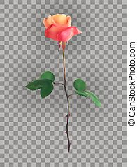 Beautiful Pink Rose Stems on a transparent background. Vector Illustration.