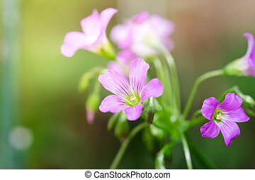Beautiful pink small flower in the garden