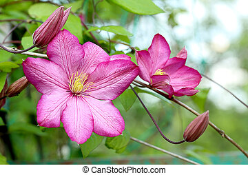 Beautiful pink spring flowers on outdoors