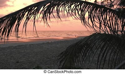 Beautiful pink sunset over sea on the beach with palm leaves, background